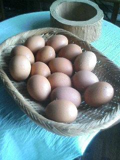 卵だらけ.JPG