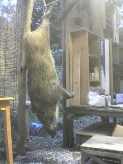 2005猟期の猪.jpg