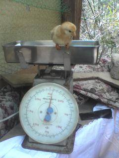 体重測定2.jpg