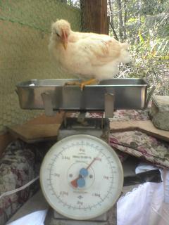 体重測定1.jpg